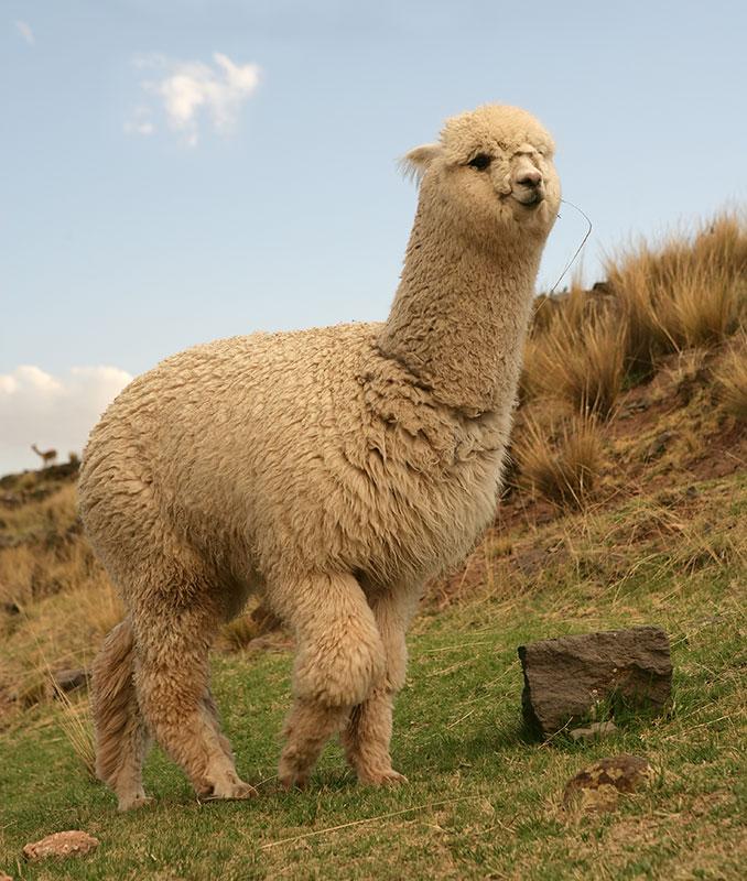 حيوانات مخيفة حيوانات مخيفه 2012